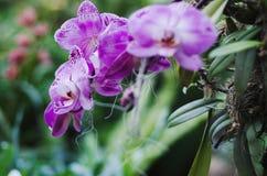 De orchideeën sluiten omhoog bij botanische tuin Stock Foto
