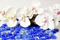 De orchideeën van Wellness stock afbeeldingen