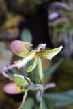 De Orchidee royalty-vrije stock afbeeldingen