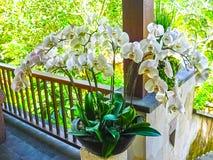 De orchidee in Bali royalty-vrije stock foto's