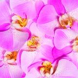 De orchidee bloeit achtergrond close-up Stock Foto
