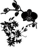 De orchidee bloeit vectorclematissen Royalty-vrije Stock Fotografie