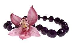 De orchidee van de schoonheid Stock Foto