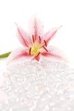 De Orchidee van de winter Royalty-vrije Stock Afbeelding