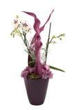 De orchidee van Kerstmis Stock Foto's