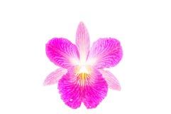 De orchidee van Thailand op witte achtergrond Stock Foto