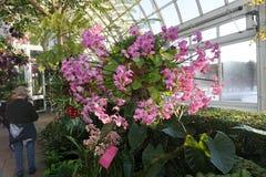 De Orchidee van 2015 toont: Kroonluchters 180 Stock Afbeeldingen