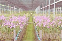 De orchideelandbouwbedrijf van de tuinbloem Royalty-vrije Stock Foto's