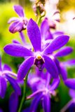 De Orchideetuin van Singapore Stock Foto's