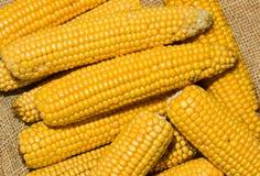 De oren van de maïs op jute Stock Foto's