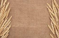 De oren van de tarwe royalty-vrije stock afbeelding