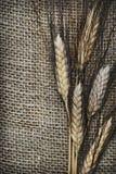 De oren van de tarwe royalty-vrije stock fotografie