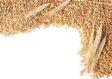 De oren van de tarwe met zaden royalty-vrije stock foto's