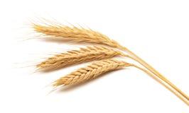 De oren van de tarwe over witte achtergrond Stock Foto