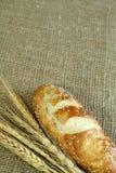 De oren van het brood en van de tarwe bij het ontslaan. Royalty-vrije Stock Foto's