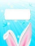 De oren van het konijn Stock Foto