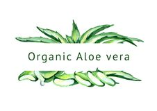 De organische achtergrond van Aloëvera Waterverfhand getrokken illustratie Stock Foto's
