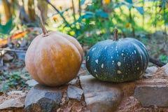 De Organische Gele en groene pompoenen van het platteland samen voor creatief gebruik stock afbeeldingen