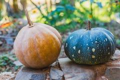 De Organische Gele en groene pompoenen van het platteland samen voor creatief gebruik stock afbeelding