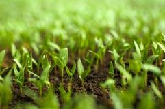 De organische landbouw Stock Foto's