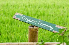 De organische landbouw op houten etiket in de aard Stock Foto