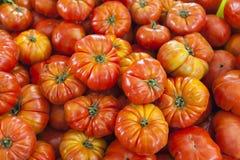 De organische tomaten van de dorpsmarkt Kwalitatieve achtergrond van tomaten Verse tomaten Rode tomaten Royalty-vrije Stock Foto