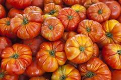 De organische tomaten van de dorpsmarkt Kwalitatieve achtergrond van tomaten Verse tomaten Rode tomaten Stock Foto