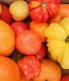 De organische Tomaten van het Erfgoed Royalty-vrije Stock Afbeeldingen