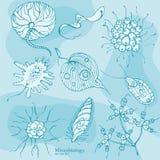 De Organismen Vectorreeks van de microbiologieprotozoa Stock Fotografie