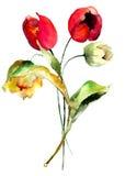De originele bloemen van Tulpen Royalty-vrije Stock Afbeeldingen