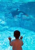 De orka is benieuwd Stock Fotografie