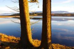 De oro en el agua de Kielder, parque de Northumberland, Inglaterra Imagenes de archivo