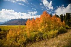 De oro - parque nacional magnífico de Teton Imagen de archivo libre de regalías