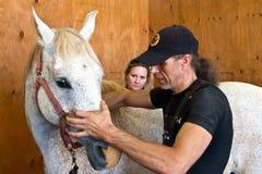 De osteopathie van het paard Stock Foto's