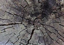 De oude achtergrond van de boomstomp Ruwe geweven oppervlakte met ringen en barsten royalty-vrije stock afbeeldingen