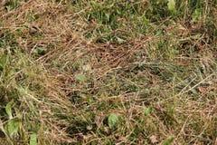 De oude Achtergrond van het Gras Stock Afbeelding