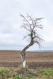 De oude appelboom groeit op een weide stock foto's