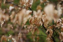 De oude bladeren van de de lentetijd royalty-vrije stock afbeeldingen