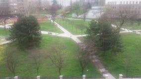 De oude bomen van het park groene gras Stock Afbeeldingen