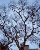 De oude boom stock afbeelding