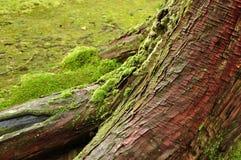 De oude boom Royalty-vrije Stock Foto
