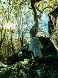 De oude boom in diepe wildernis Royalty-vrije Stock Foto's