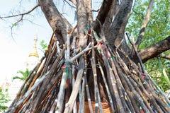 De oude boom en de stut binden bomen vast houden dalend stock afbeelding