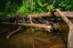 De oude boom gevallen in de kreek Royalty-vrije Stock Foto's