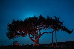 De oude boom van Cyprus op een achtergrond van de nachthemel Verlichte backlit maan Stock Foto