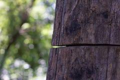De oude boom wordt gescheiden stock afbeeldingen