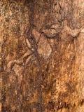 De oude boomboomstam royalty-vrije stock afbeeldingen