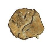 De oude boomstam van de besnoeiingsboom stock fotografie
