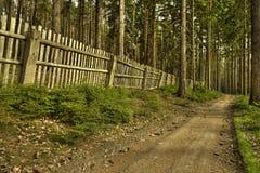 De oude bosweg royalty-vrije stock foto