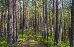 De oude bosweg Royalty-vrije Stock Fotografie